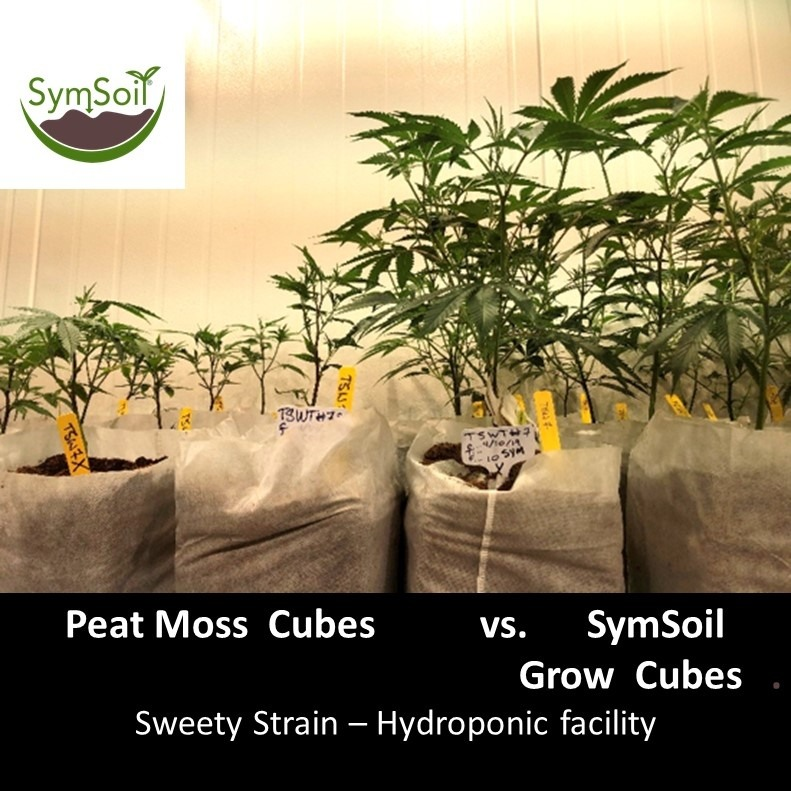 SymSoil Cubes - Sweetie Strain w text
