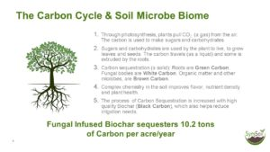 Bacteria, especially nitrogen fixing  bacteria, play a key role in the  complete soil food web