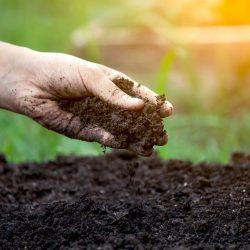Touch Soil